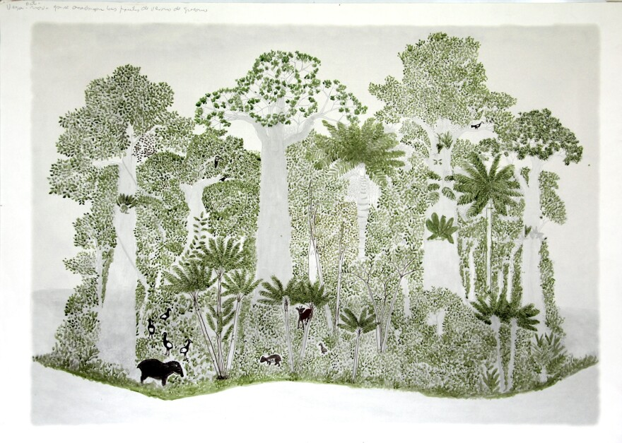 In each of Rodriguez's rain forest drawings, the vegetation and animal life is a little different, reflecting the season.<strong> </strong>