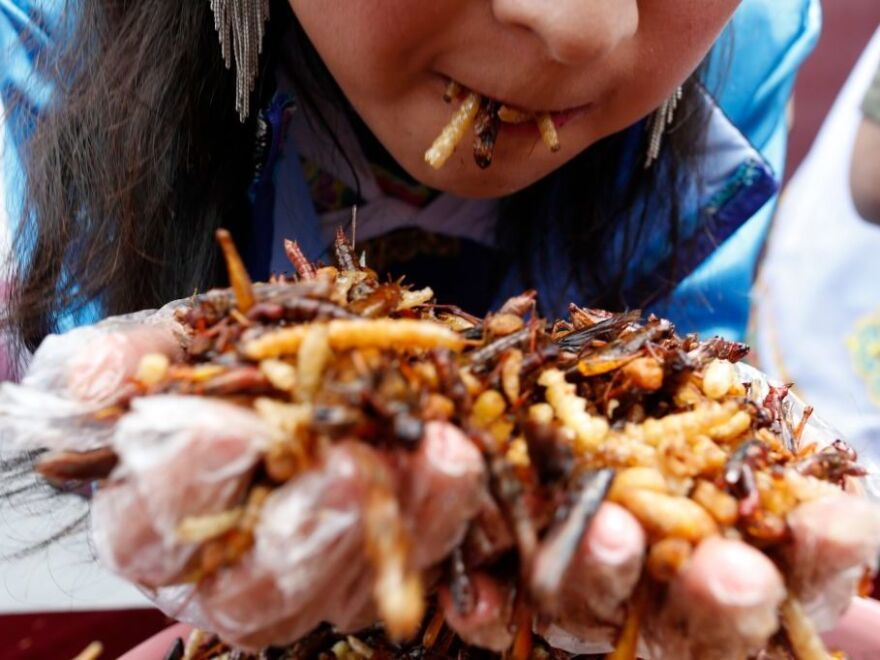 Tourists eat fried insects, including locusts, bamboo worms, dragonfly larvae, silkworm chrysalises and more during a competition in Lijiang, China. For Westerners, eating insects means getting over the ick factor.