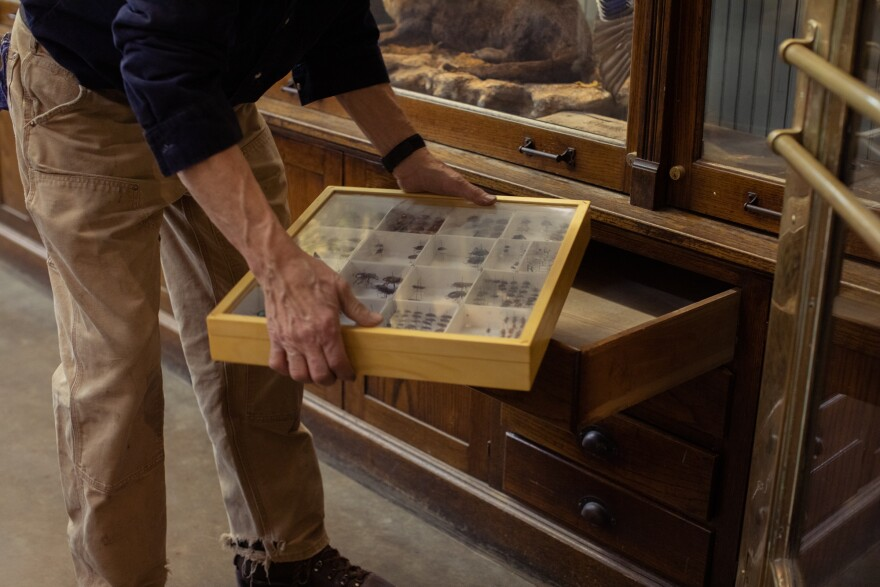 George Diehl, City Museum's building manager, showed off his collection of insects during a recent livestream. [4/8/20]