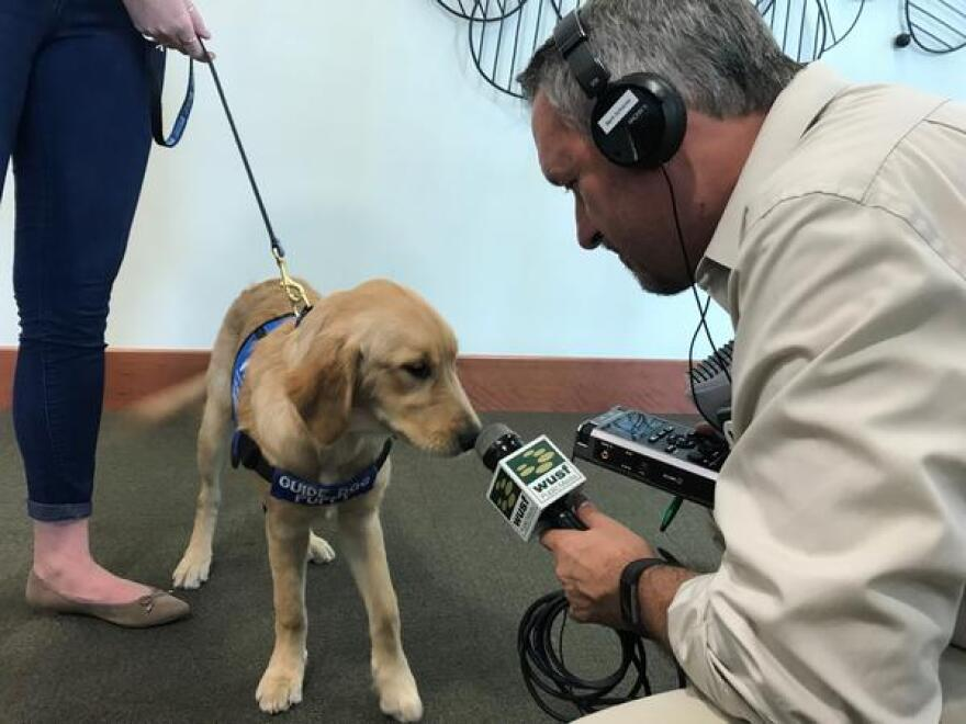 Reporter Mark Schreiner learned the hard way - Finley is a puppy of few words.