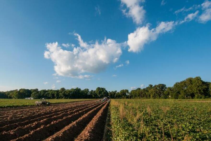 032419_USDA_farmland.jpg