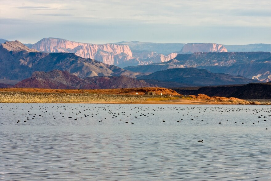 Flocks of birds float on the surface of a lake. Cliff face, shining with alpenglow, rise up behind them.