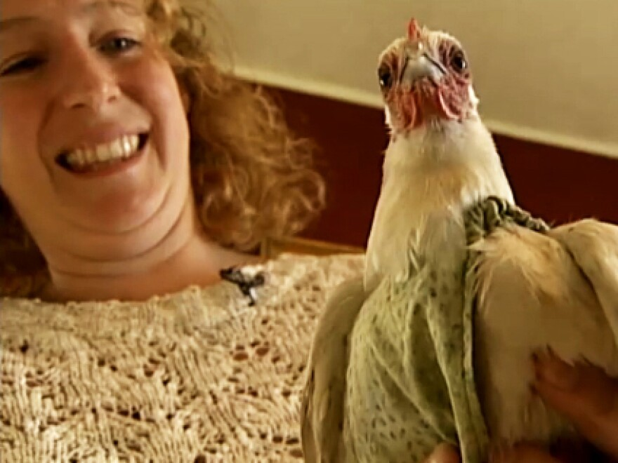 """""""A lot of my customers use them as dresses,"""" Julie Baker, of Claremont, N.H., says about the poultry diapers she sells online. """"They want their chickens to look really cute."""""""