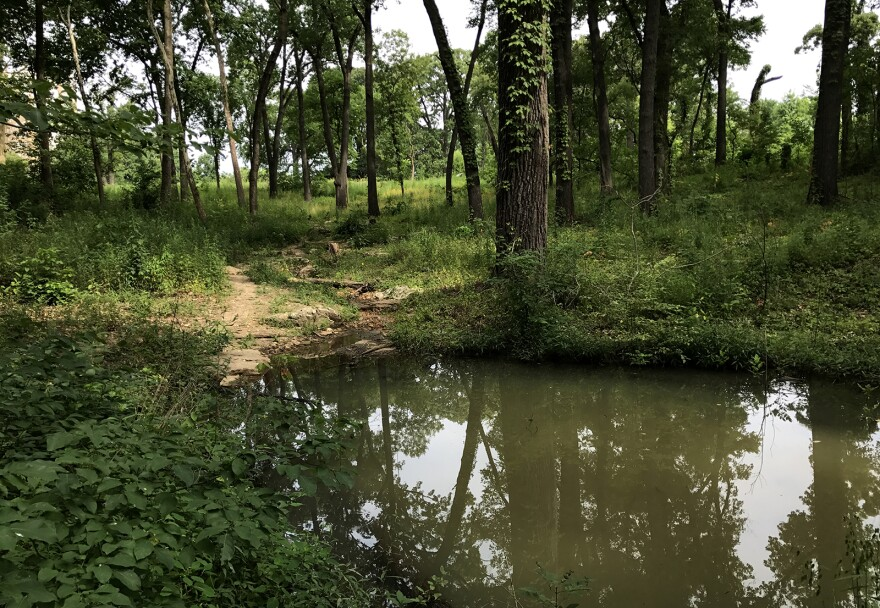 A pond inside the John F. Kennedy Memorial Forest in Forest Park. July 2017.
