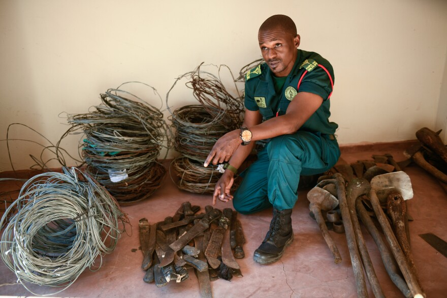 Paul Chidyera, head of law enforcement at Liwonde, is surrounded by some of the snares his team picks up in the park. Snaring an animal involves using a simple piece of steel wire with a loop in the middle, hung between two trees. Typically, Chidyera says, poachers will use branches to block off a regular worn path through the savanna so animals make a detour into the snare.