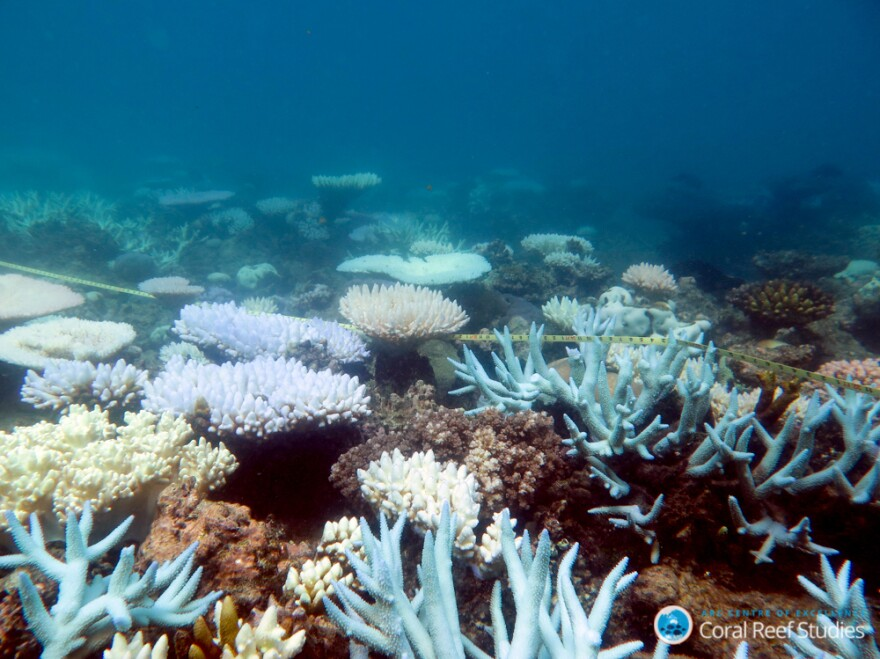 """There are """"winners"""" and """"losers"""" among corals as they respond to the accumulating impacts of climate change."""