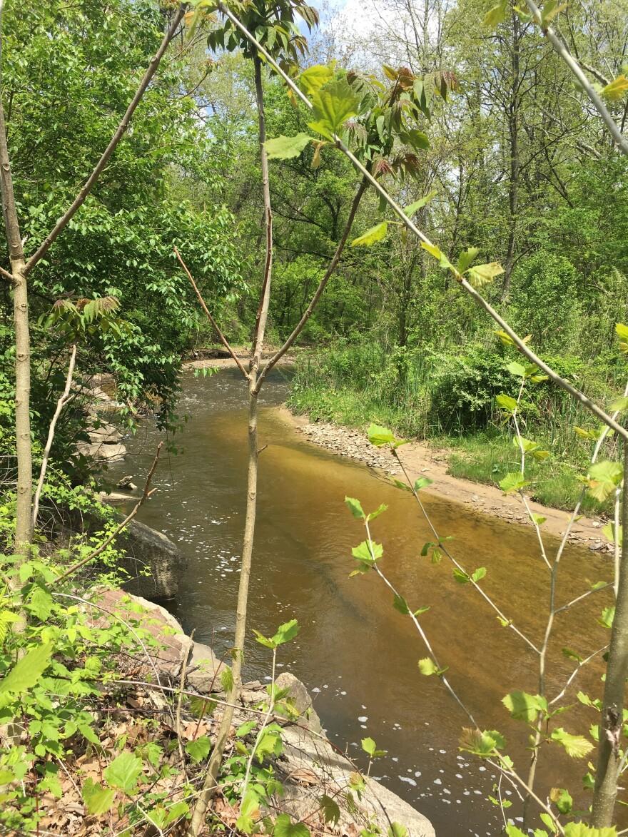 Mud Brook