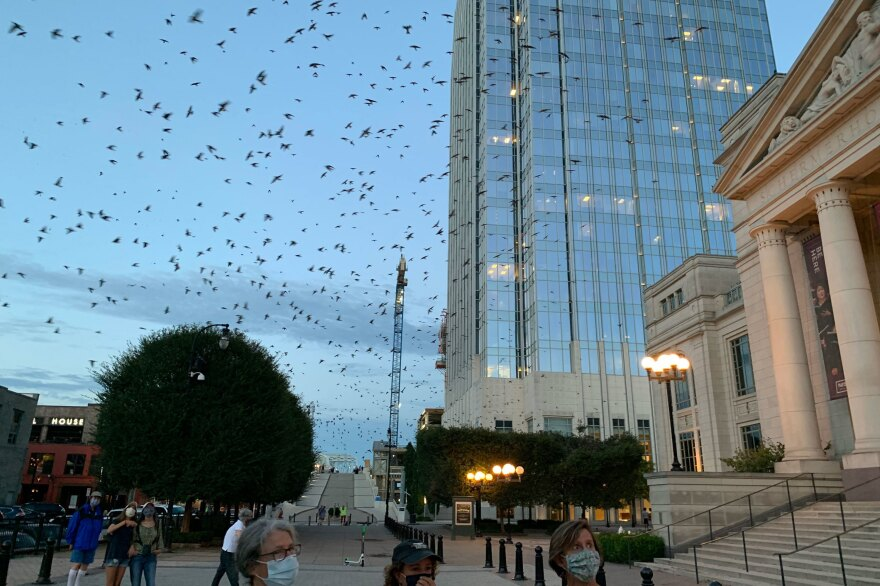 People have flocked to downtown Nashville, Tenn. the past few days to take in a rare sight: thousands of Purple Martins. The migratory birds, on their way south for the winter, rarely roost in urban areas.