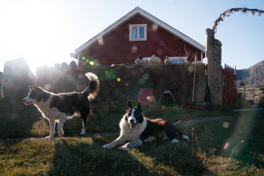 Two of the four border collies on the farm relax after helping to herd the sheep into the barn.