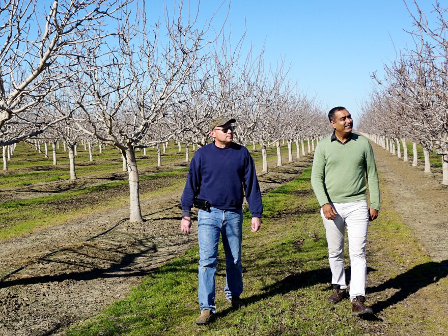 Farm manager Jonathan Battig and professor Gurreet Brar walk through a test plot of pistachio trees.