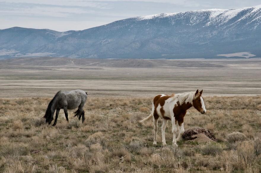 Wild horses near Utah's Onaqui mountains.