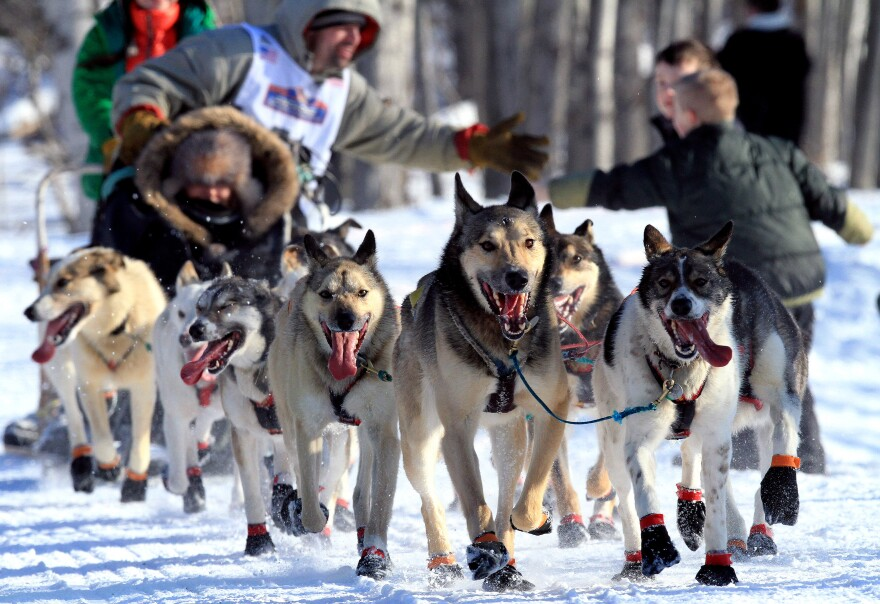 Several female mushers in the Iditarod Trail Sled Dog Race are trying out new attire that allows them to skip bathroom stops. Here, a musher and his team pass fans at the ceremonial start of the race in Anchorage.