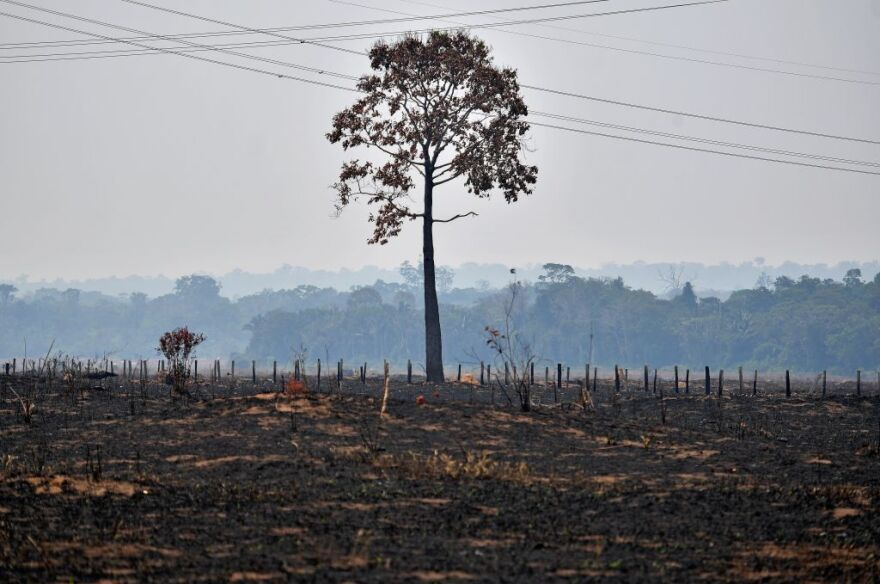 A lone burnt tree stands on a deforested area in the surroundings of Porto Velho, Rondonia State, in the Amazon basin in west-central Brazil. (Carl de Souza/AFP/Getty Images)