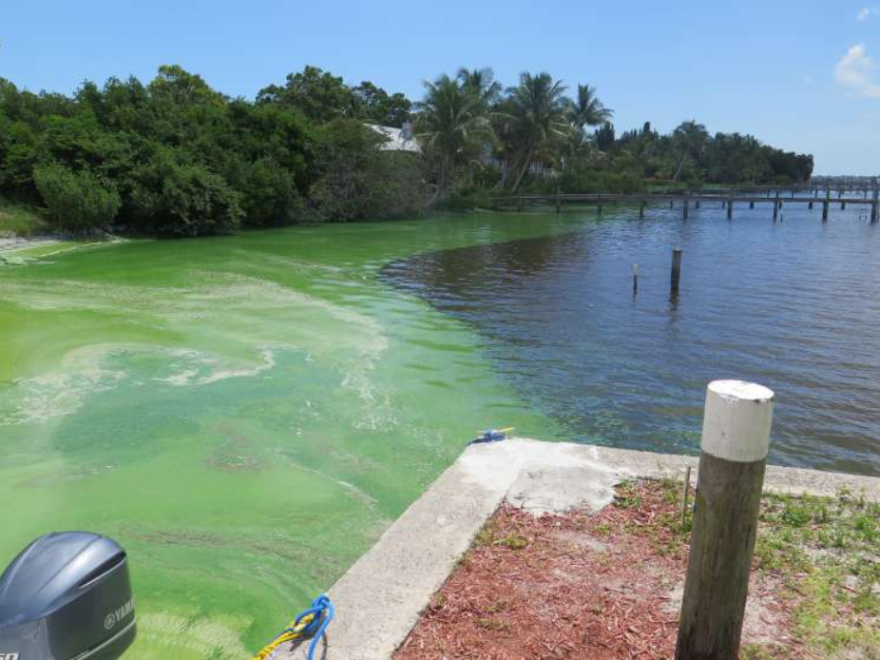 An algae bloom in Indian River Lagoon.
