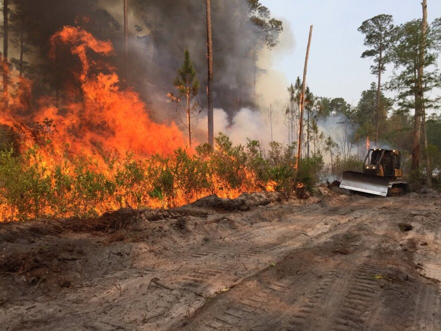 Areas across Florida are at an elevated risk of wildfires with dry conditions prevailing.