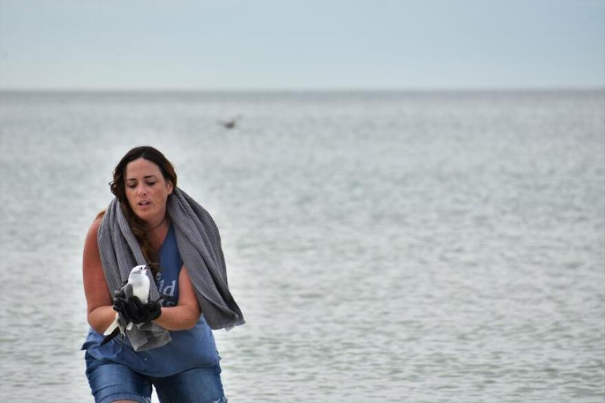 """Colleen Gill emerges from the Gulf of Mexico after rescuing a bird that fell out of the sky and into the water. """"Sorry, I didn't want it to drown,"""" she said."""