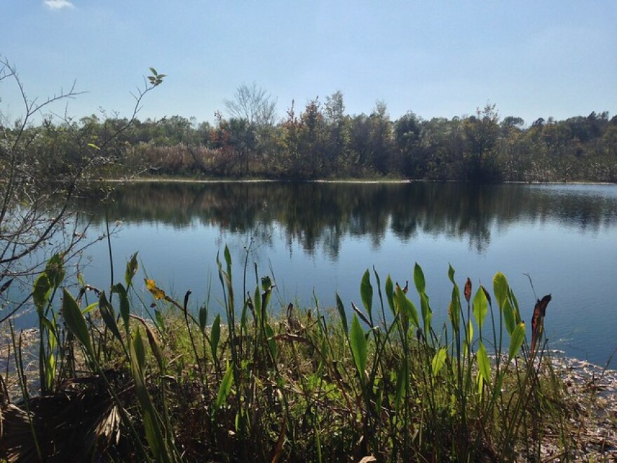 Waterways such as this lake in the Hampton Tract Preserve are managed by the Southwest Florida Water Management District