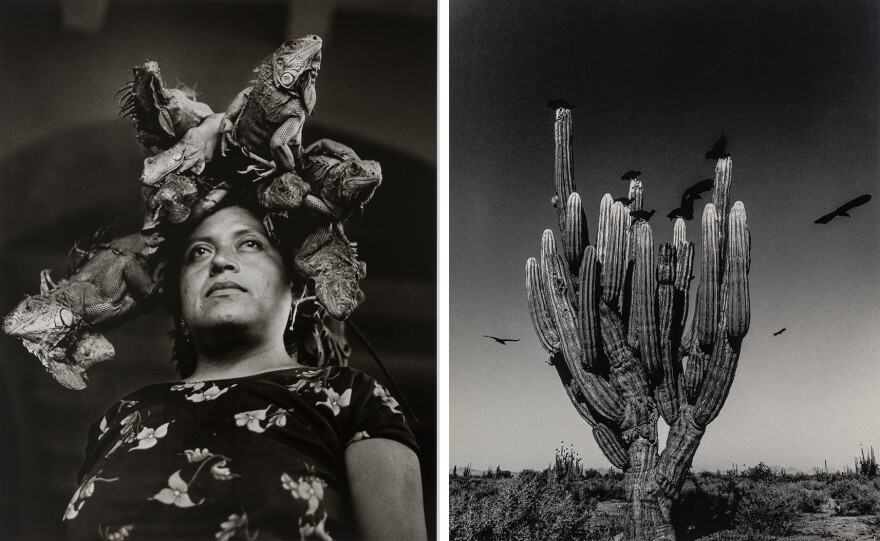 Left: <em>Our Lady of the Iguanas</em>. Right: <em>Sahuaro [Saguaro].</em>