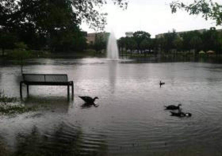 Nice weather for ducks at USF's Tampa campus