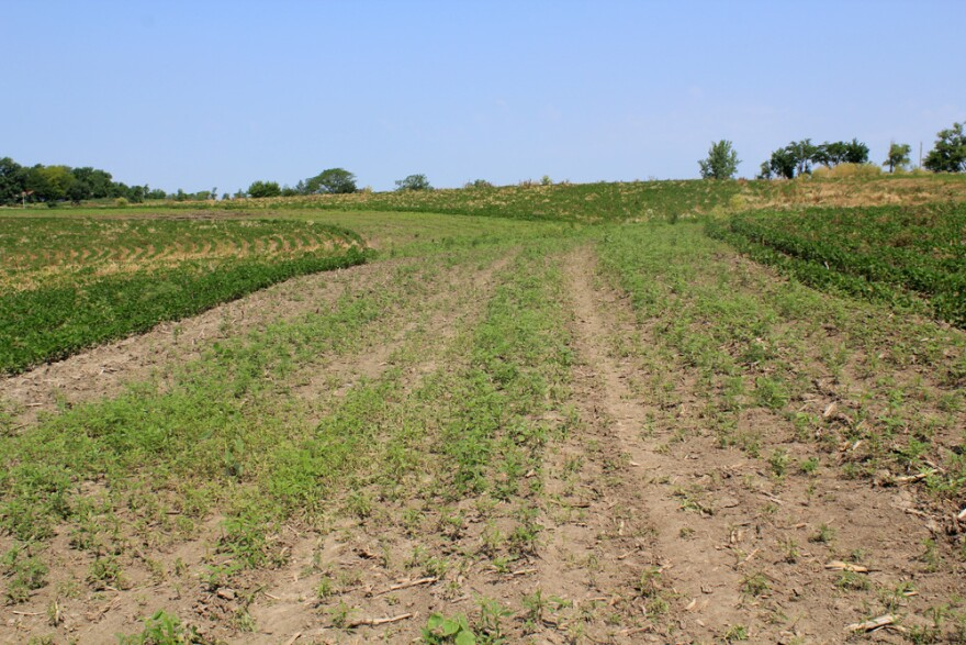 0719_prairie-soil-weeds.jpg