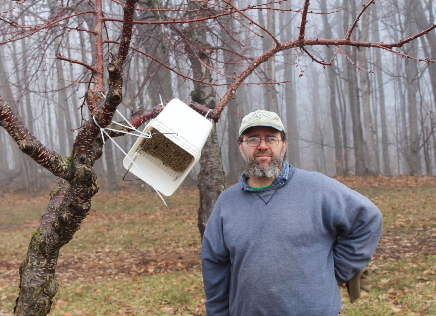 "The honey bees that usually pollinate tart cherry trees are vulnerable to erratic spring weather. So, Todd Springer has made hives out of buckets for the more resilient horn-faced bees, which will pollinate his trees even in inclement weather. Springer calls the bees his ""pollinator insurance."""