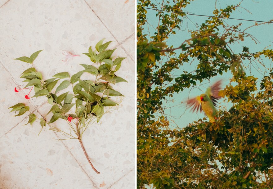 Left: A Gudi arrangement is used to ward off evil and invite prosperity into a house during the Marathi new year. It's usually created with neem leaves and a colorful flag, but curry leaves are used here, because that's what was available. Right: A parakeet in midflight.