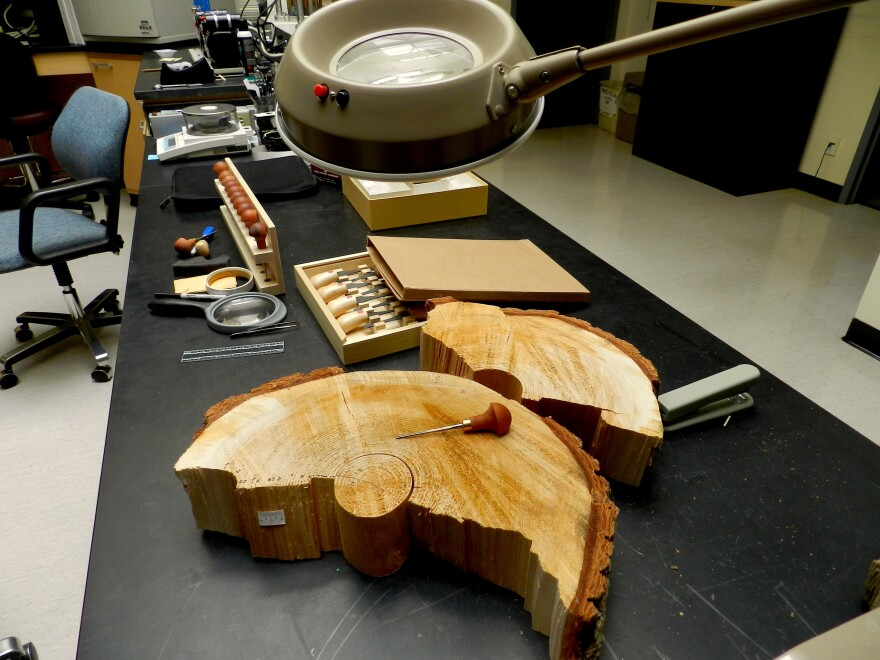 Forensic scientists in Ashland are developing new ways to identify rare and protected wood species.
