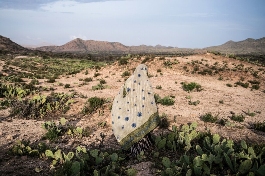 A woman walks through a cactus field in a drought-stricken area of western Somaliland.