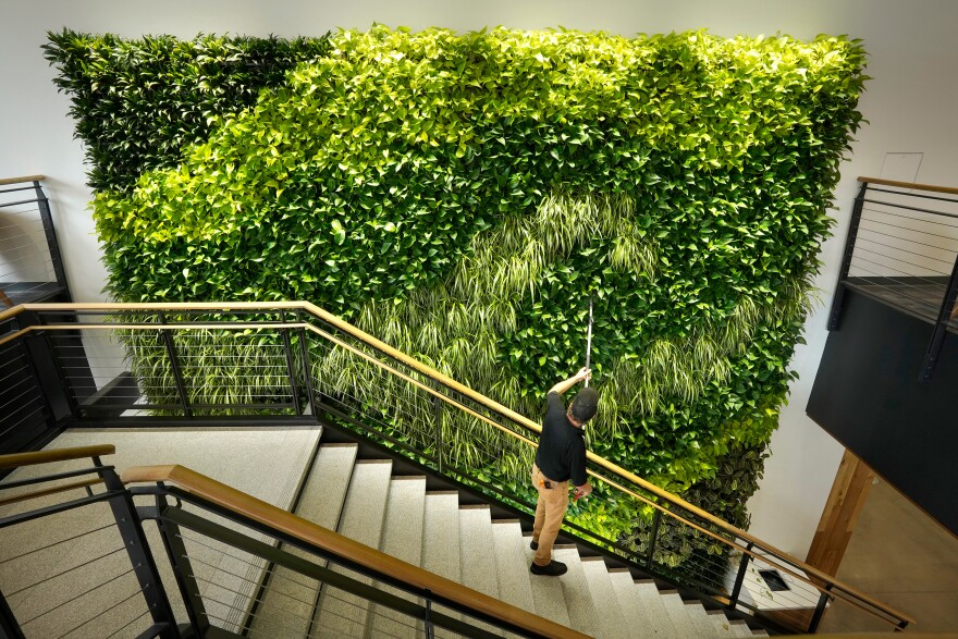Architects say making the office more like the outdoors — with filtered air and good ventilation — will be a priority post-pandemic. This living wall in the Danielle N. Ripich Commons at the University of New England in Biddeford, Maine, is one such approach.