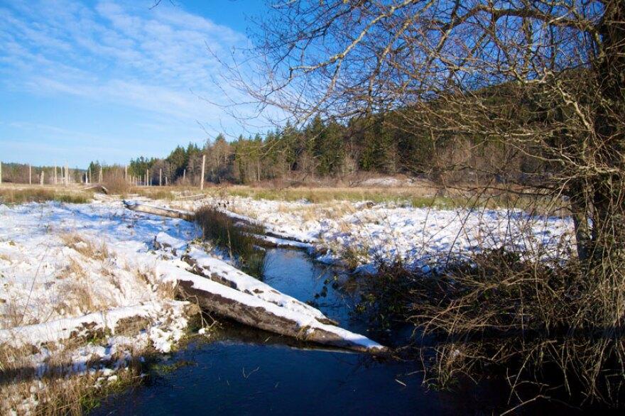 tarboo_creek_in_snow.jpg