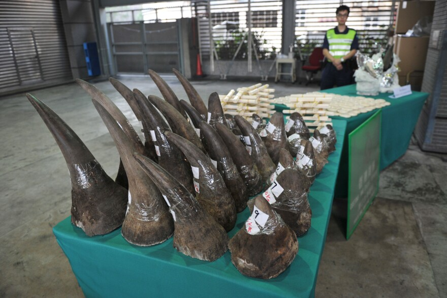 Confiscated rhinoceros horns are displayed in Hong Kong's Customs and Excise Department Offices on Nov. 15, 2011. Supporters of the ban on trading rhino horn say striking it down would encourage international smuggling of rhino horn.