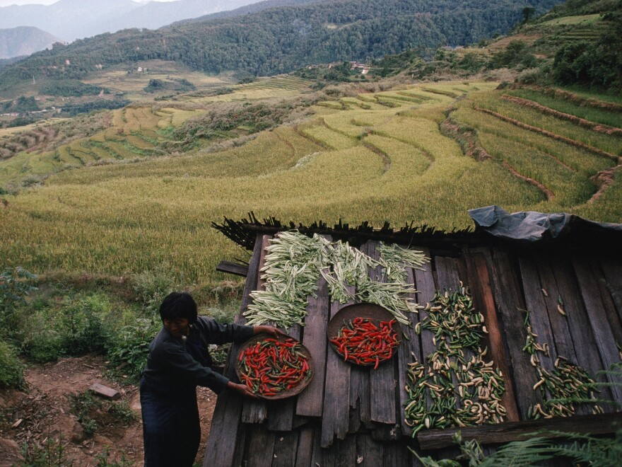 A Bhutanese farmer puts her harvest of chilies on the roof of a shed to dry and protect it from wild boars, deer, and monkeys in 2006.
