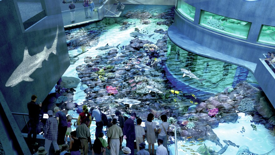 Projected image of the complete Blacktip Reef exhibit.