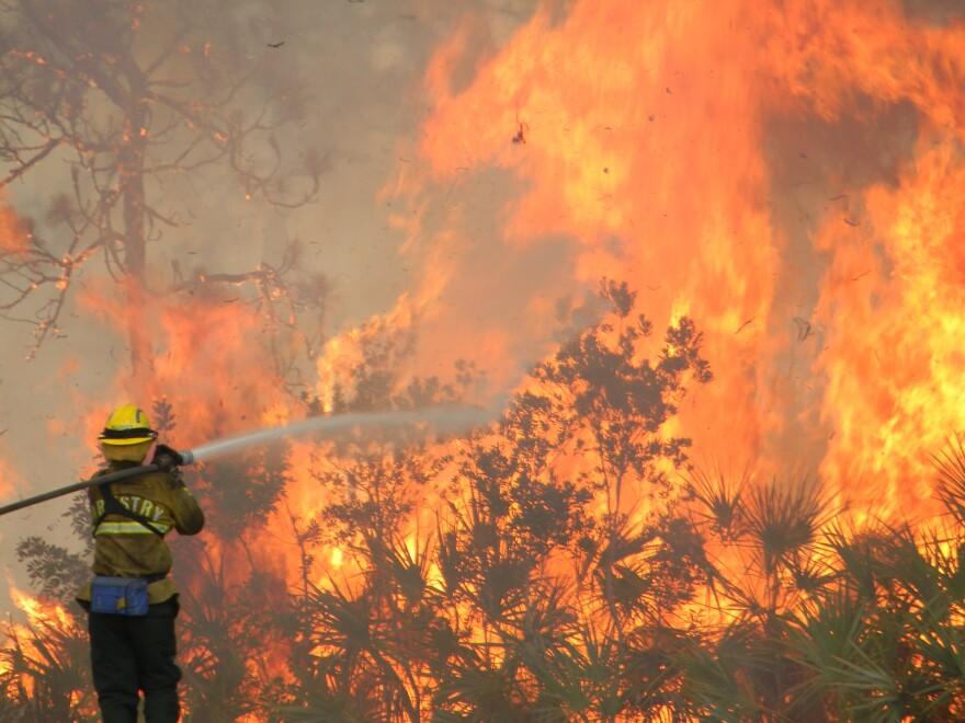 forestryFIRE3-6-17.jpg