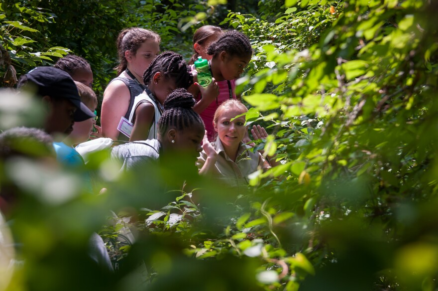Campers listen to Katie Dreas of the U.S. Fish and Wildlife Service explain foliage during a summer camp at Little Creek Nature Center on July 17, 2017.