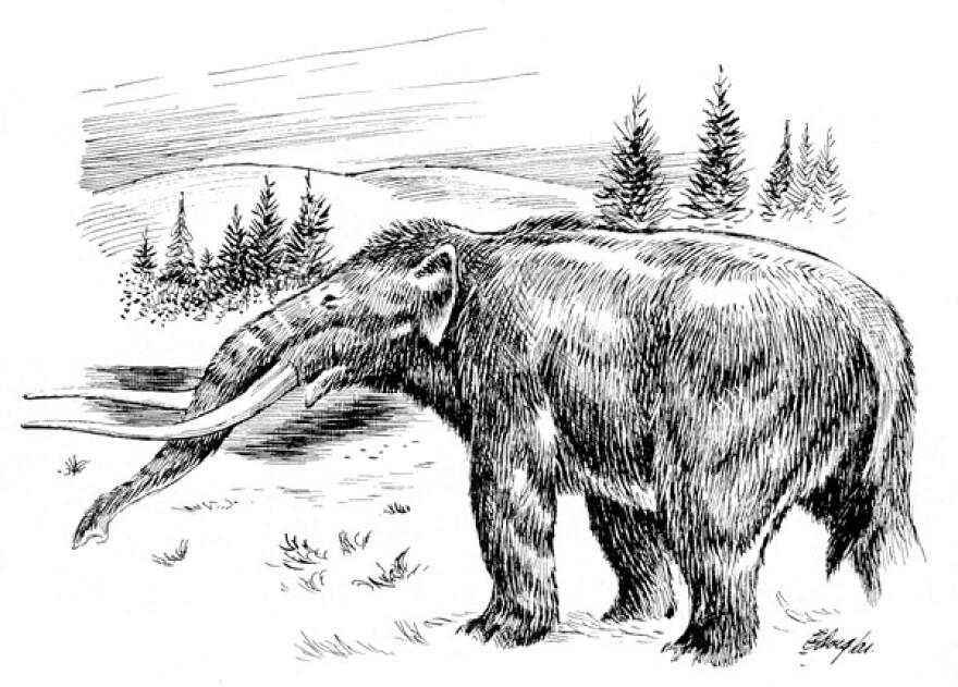 Ancient American Elephant, Mastadon