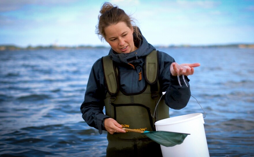 """Gastrophysicist Mie Thorborg Pedersen holds a jellyfish — or a potential snack. She has come up with an """"embarrassingly simple"""" process for making jellyfish chips."""