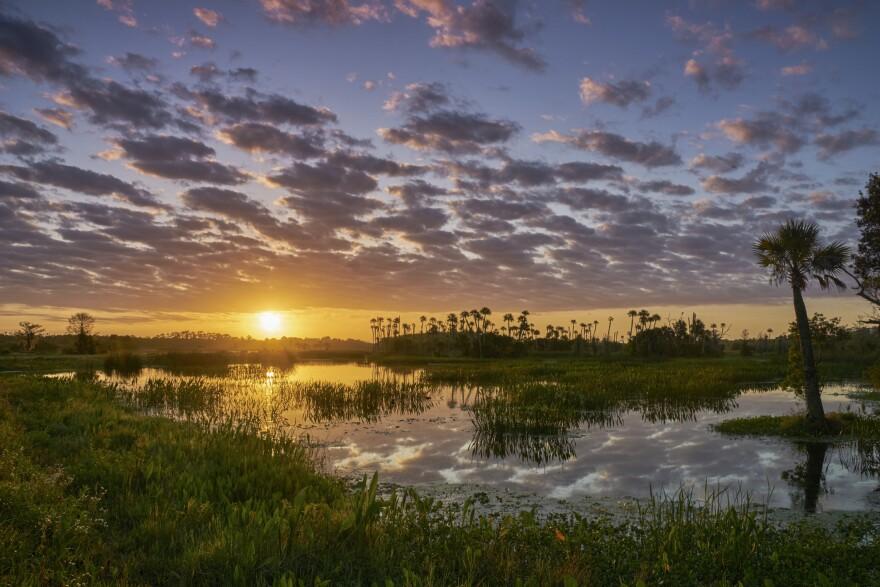Sun setting over a wetland area.