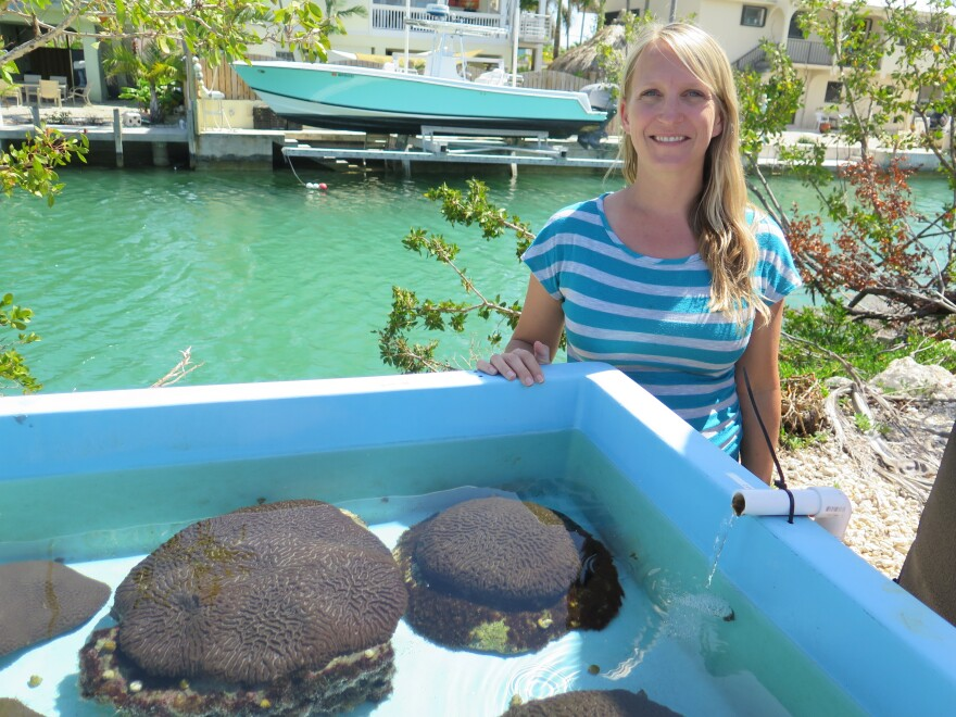 """Erinn Muller is science director at the Mote Marine Lab in the Florida Keys.  She says the lab's work to raise healthy corals is a """"beacon of hope"""" for profoundly damaged reefs."""