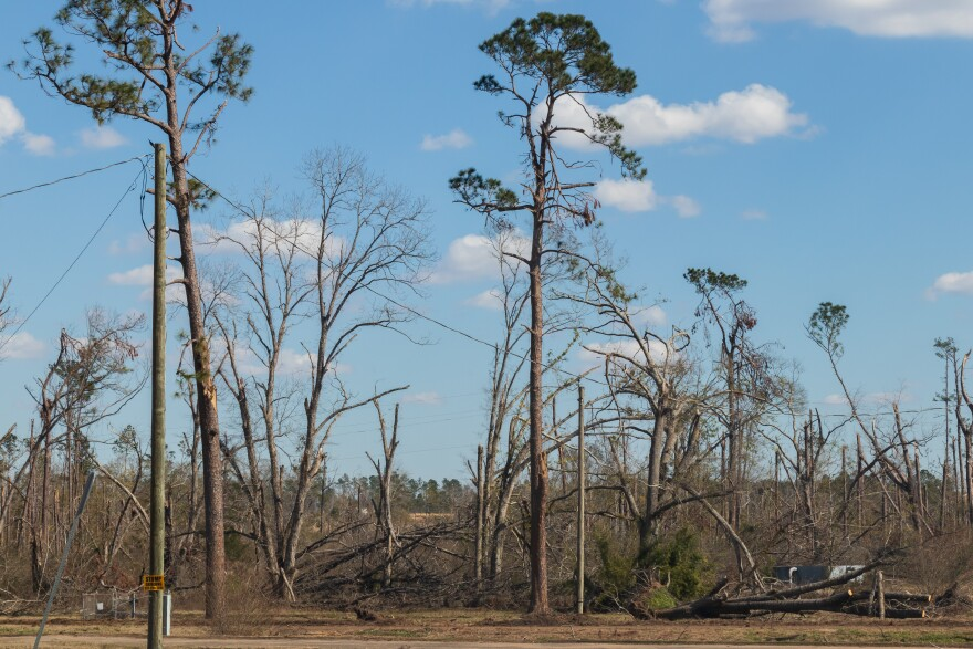 Downed trees hurricane michael marianna