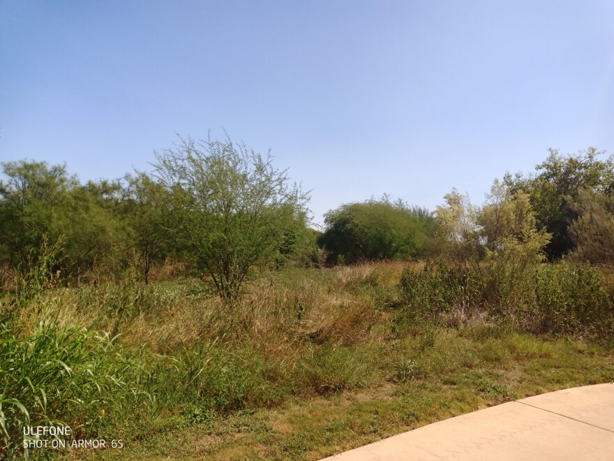 Sections of the Mission Reach where the San Antonio River Authority will be removing vegetation in October 2020, as part of the adaptive management approach in maintaining proper flood conveyance throughout the eight-mile stretch of ecosystem restoration project.