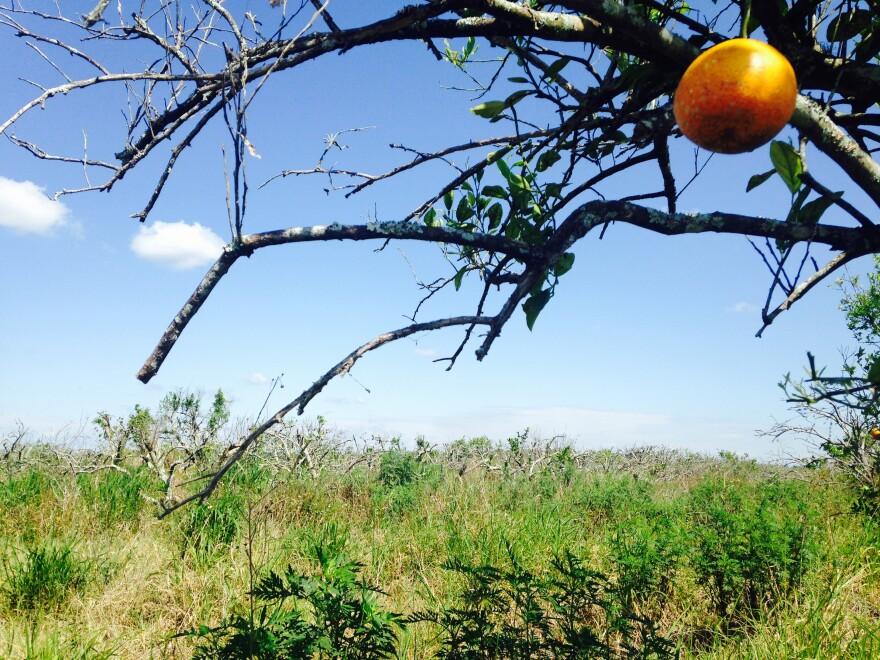 lone_orange.jpg