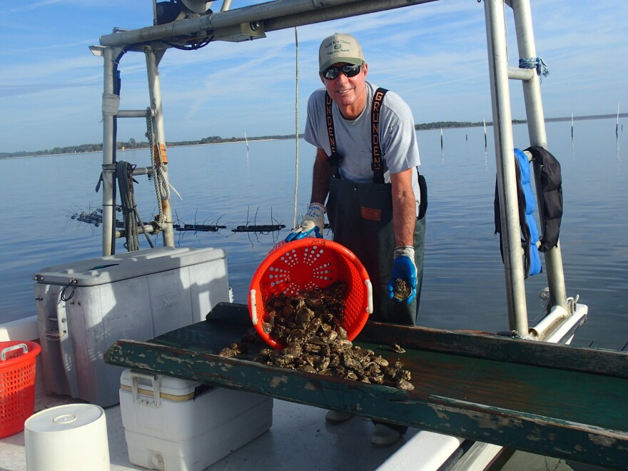 A grower spills oysters out of an orange bucket onto a boat.
