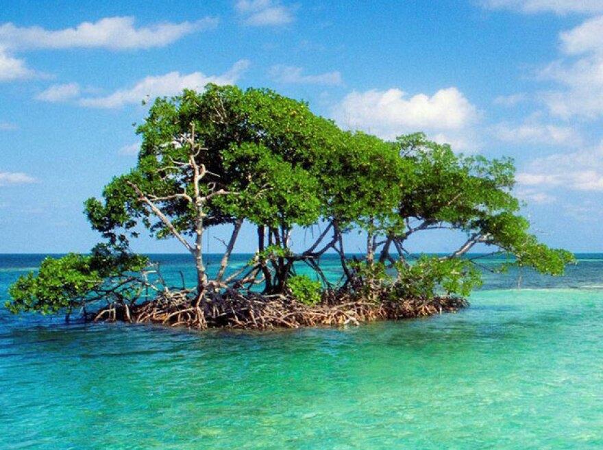 mangrove_island.jpg