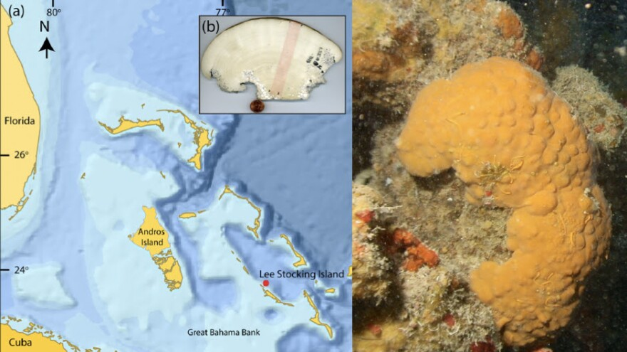 The 615-year-old sponge used for the study was found near Lee Stocking Island in the 1990s.