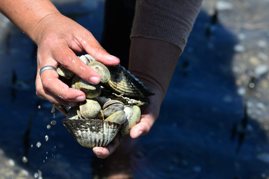 Local residents collect shells of dead mollusks at a beach on the Gulf of Fonseca. Some suspect climate change caused a massive death of mussels, clams, and other mollusks on the shores, beaches and estuaries of this sector of Honduras bordering Nicaragua and El Salvador.