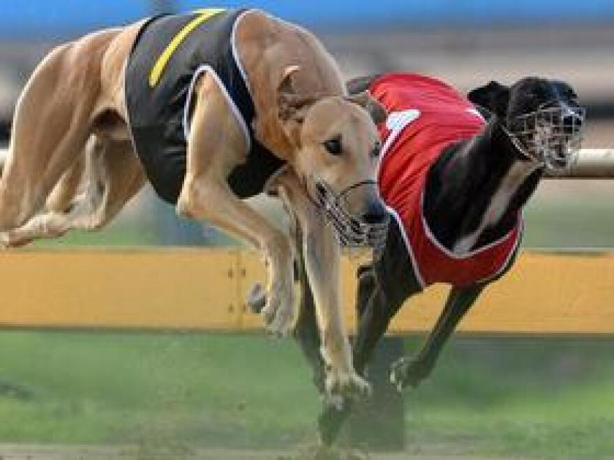 The Florida Greyhound Association is challenging a decision to allow a South Florida facility to drop dog racing and continue offering slot machines.