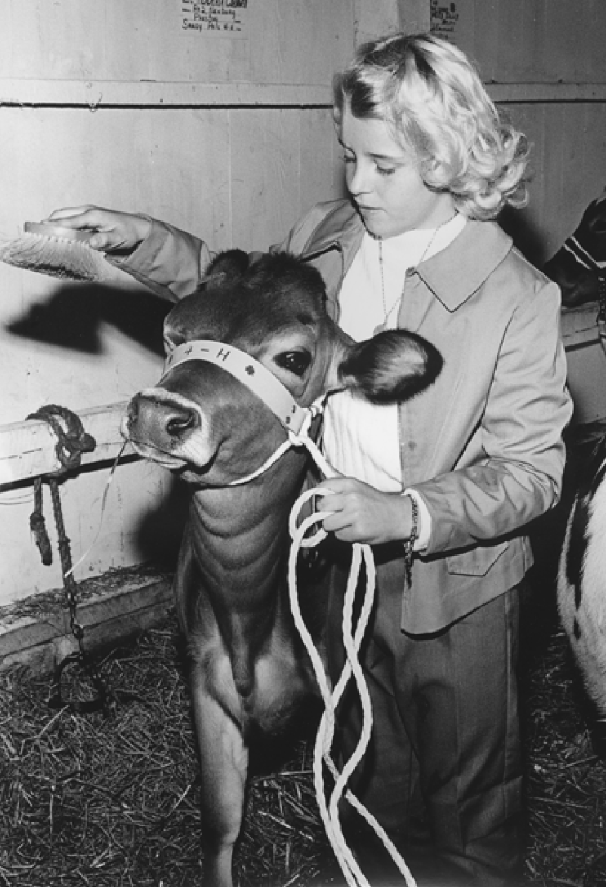 A young West Virginian grooms her 4-H calf.
