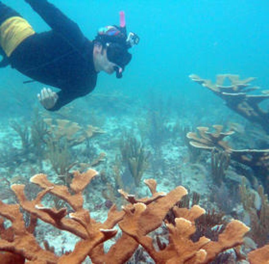 A researcher checks a coral colony.
