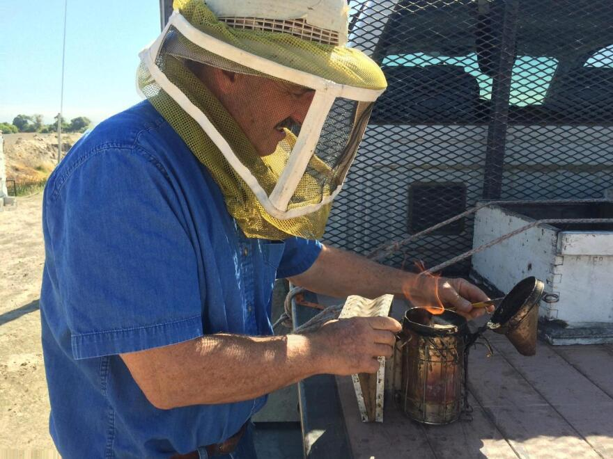 Gene Brandi uses smoke to calm the bees he works with.
